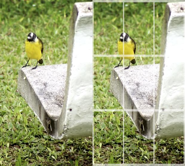 regra-dos-tercos-passarinho